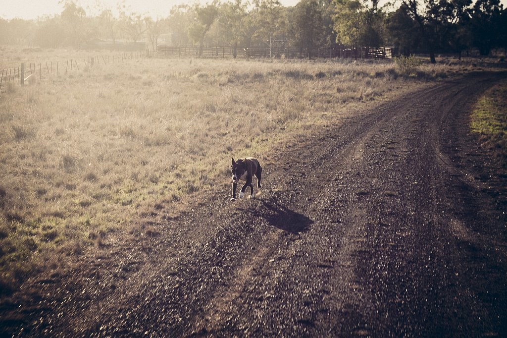 Farm-Australia-2.jpg
