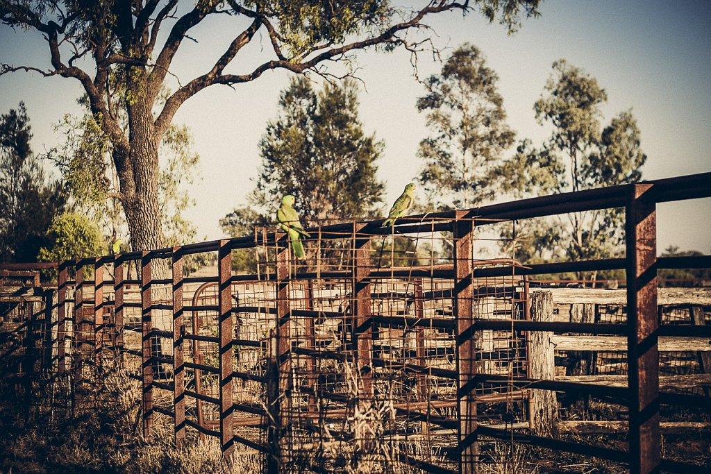 Farm-Australia-4.jpg