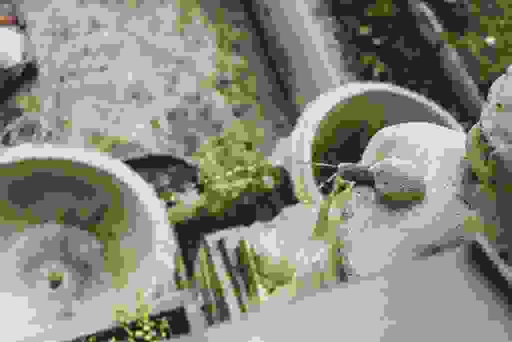 Brunnenbepflanzung-74-von-81.jpg