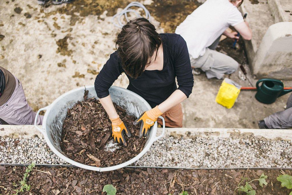 Brunnenbepflanzung-76-von-81.jpg